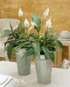 Plante Suspendue Intérieur : 10 plantes d 39 int rieur d polluantes femmes d 39 aujourd 39 hui ~ Teatrodelosmanantiales.com Idées de Décoration
