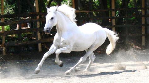 horse wallpapers cute hd horses running pretty stallion beauty wild gorgeous definition desktop snow