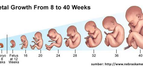 Tips Penjagaan Kandungan Awal Kehamilan Kebutuhan Gizi Ibu Hamil Pada Trimester Pertama