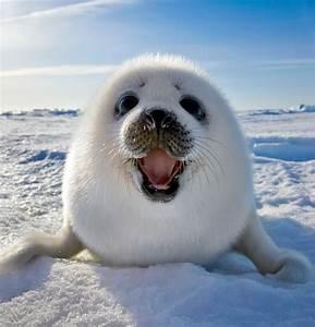 Top 20 World's Cutest Animals  Cutest