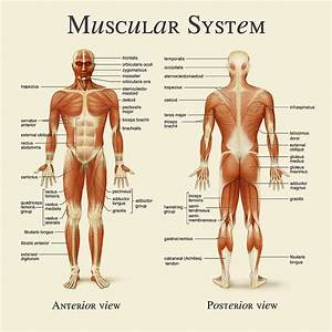 Muscular System Photograph by Gina Dsgn