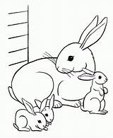 Coloring Animal Animals sketch template