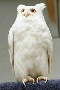 Cool Pictures Of Albino Animals 2