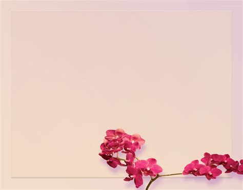 red orchid background  stock photo public domain