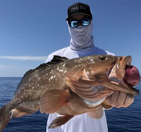 grouper fishing facts fish sea deep species fl limits beach gulf virtually harvest seasons every link info clearwater