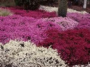 Couvre Sol Vivace : les couvre sol astuces en jardinage 1er ~ Premium-room.com Idées de Décoration