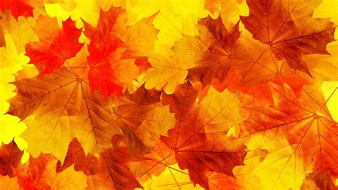 Fall Backgrounds Yellow by Nature Leaves Minimalism Fall Orange Yellow Macro