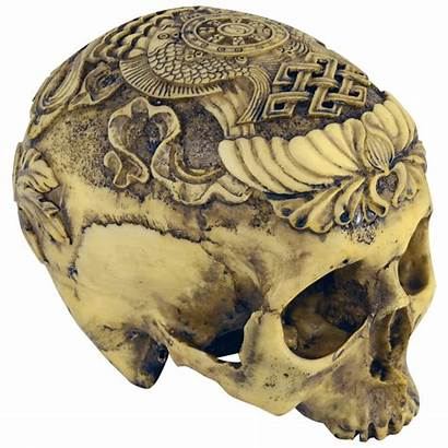 Skull Human Carved Medieval Medievalcollectibles Artistic Animal