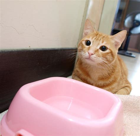 virales video katzen klingeln nach futter welt
