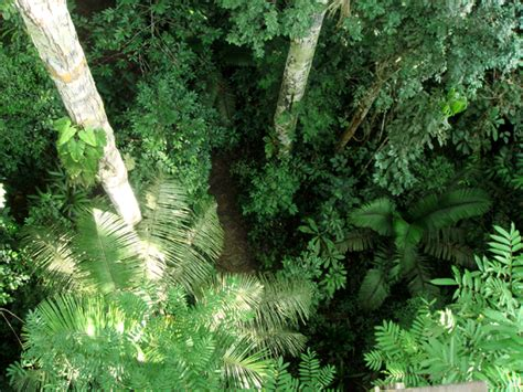 Trudie Styler on Rainforest Preservation and Human Spirit