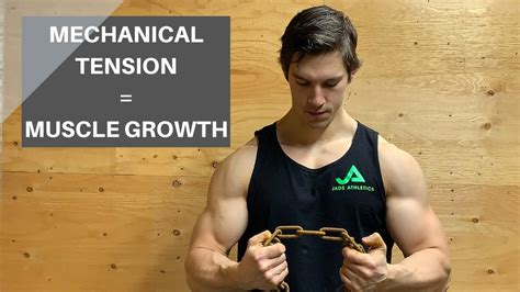MECHANICAL TENSION: THE MAIN DRIVER OF MUSCLE HYPERTROPHY ...