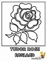 Coloring Rose Tudor Pages England Flower Flowers Template Britain Yescoloring Templates sketch template