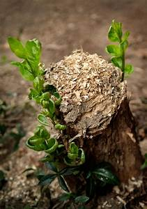 Stop Tree Stump Sprouting - Getting Rid Of Tree Stumps And ...