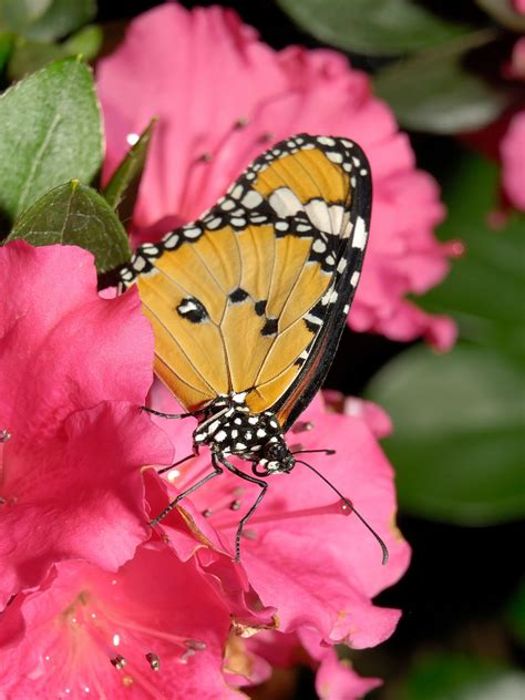 butterfly pictures wallpapers hindi sms good morning