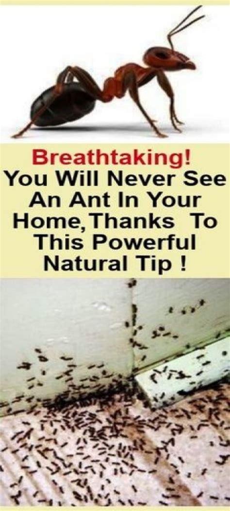 rid   ants   house   natural