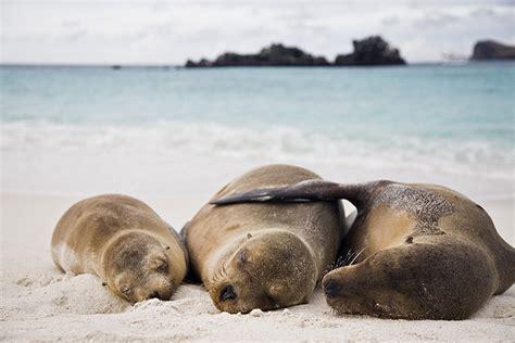 poser cuisine îles galapagos un paradis sur terre châtelaine