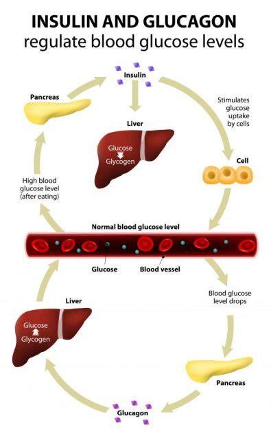 pathophysiology  diabetes    reasons
