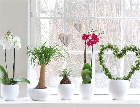 Bintig Gartencenter Pflanzen Center öffnungszeiten by Bellandris Bintig Startseite