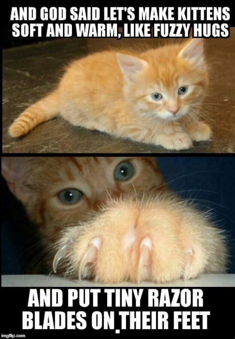 Cute Cat Meme Generator - cuddly cute kitten imgflip