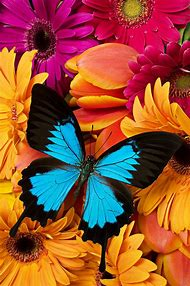 Bright Colored Flowers and Butterflies