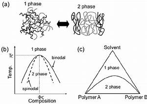 A   Phase Separation Characteristics Of A Binary Polymer Blend    B