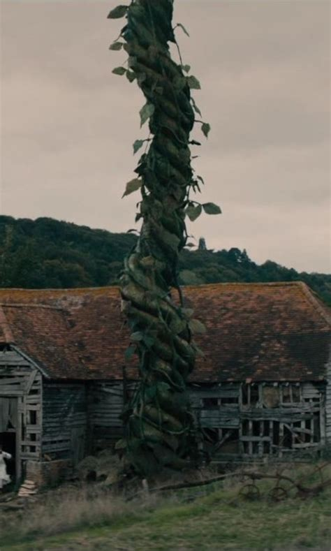 beanstalk   woods disney wiki fandom