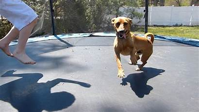 Dogs Trampolines Trampoline Jumping Dog