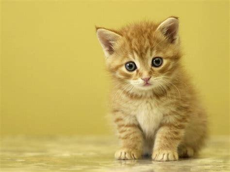 Funny Cat Desktop Wallpaper