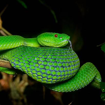 Viper Snake Reptile Ipad Terrarium Squama Mini