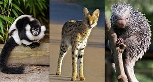Eight of the Rarest, Cutest Animals on Earth | Ever ...