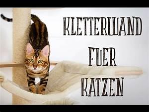 More For Cats Kratzbaum : diy kletterwand f r katzen catwalk for cats youtube ~ Whattoseeinmadrid.com Haus und Dekorationen
