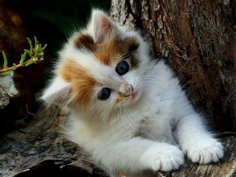 Animated Kitten Wallpaper - kitten wallpapers with 53 items