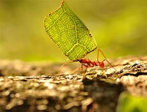 Anti Fourmi Naturel : jardin 10 anti fourmis naturels et efficaces diy ~ Carolinahurricanesstore.com Idées de Décoration