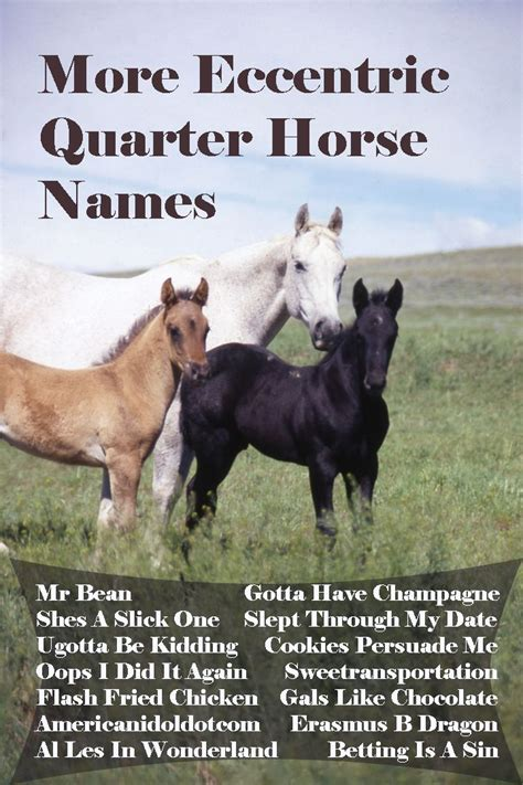 names horse fun foal horses quarter eccentric know enough these any american quarterhorse americashorsedaily