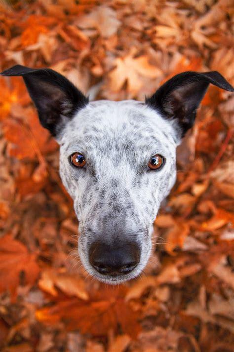 kennel clubs dog photographer