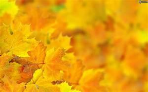 Alpenveilchen Gelbe Blätter : gelbe bl tter ~ Lizthompson.info Haus und Dekorationen
