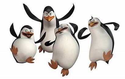 Madagascar Penguins Clipart Transparent