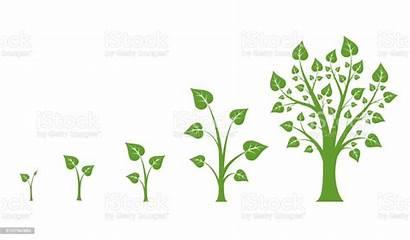 Growth Tree Vector Diagram Illustration Activity Branch