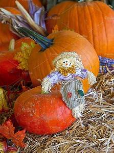 Fall, Pumpkin, Display, With, Scarecrow