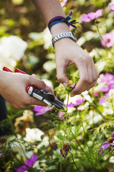 deadheading refers to what is deadheading and why do i have to do it