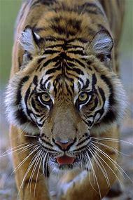 Wildlife Wild Animals