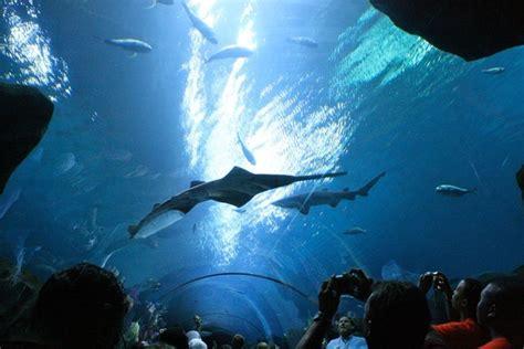 profitez du plus grand aquarium du monde en directe gurumeditation