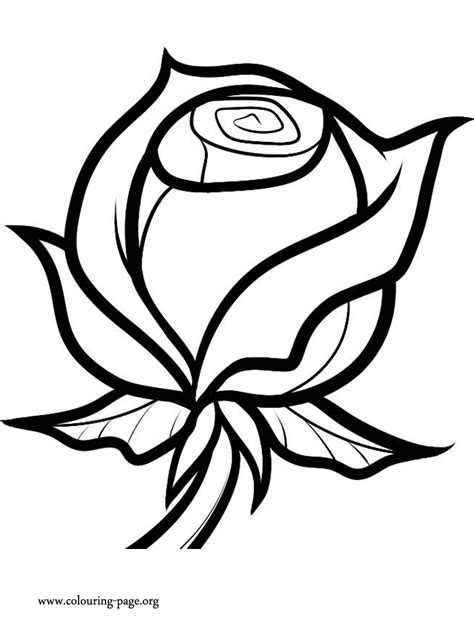 valentines day  valentine rose coloring page
