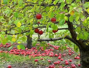 Perry Lowe Orchards
