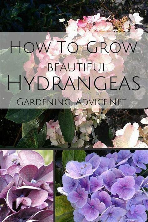 creative hydrangea garden ideas  discover
