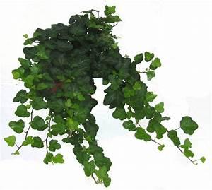 Kübelpflanzen Winterhart Schattig : hedera helix 39 wonder 39 efeu pflanzen versand f r die ~ Michelbontemps.com Haus und Dekorationen