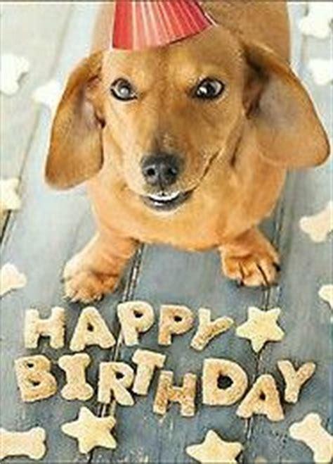 Dachshund Birthday Meme - 525 best images about dachshunds birthday greetings celebrations on pinterest birthday