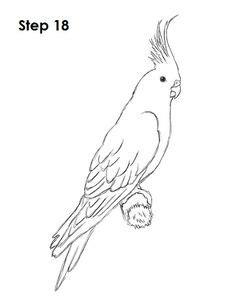 How to Draw a Blue Budgie - DrawingTutorials101.com | Bird