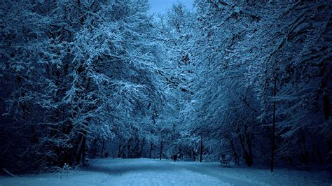 Winter Forest Night Image » Outdoors Wallpaper 1080p