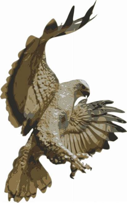 Hawk Falcon Clipart Eagle Bird Clip Prey